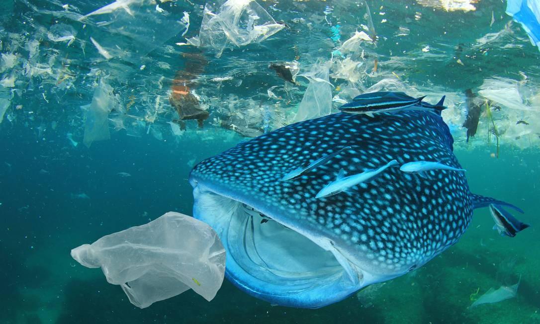 Em outubro de 2018, o Parlamento Europeu votou a favor de uma proibição extensa do uso de plásticos descartáveis. A medida visa impedir a chegada da poluição aos oceanos. A meta é abolir itens de consumo para os quais existem alternativas, a fim de erradicar, até 2021, produtos como pratos de plástico, talheres e cotonetes Foto: Rich Carey / Shutterstock