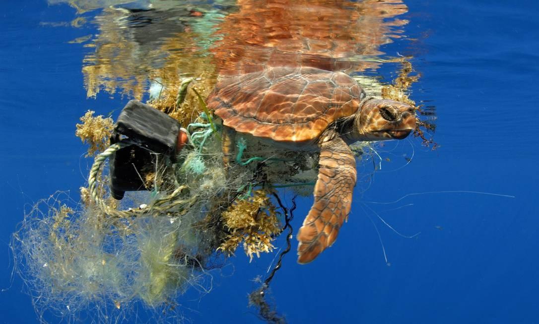 Tartaruga marinha envolta em lixo. Poluição do mar preocupa parte das autoridades mundiais, como legisladores europeus, e ativistas ambientais, que denunciam falta de esforços de grandes empresas Foto: Sergio Hanquet / BIOSPHOTO
