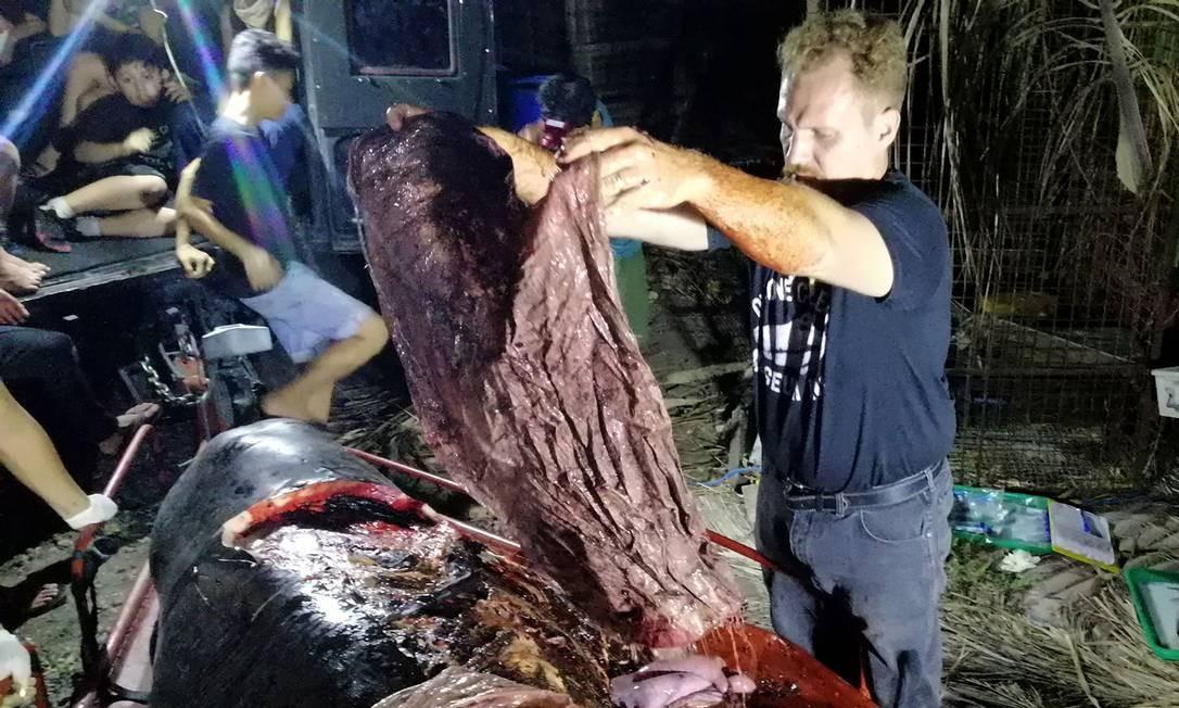 """Em caso divulgado no dia 18 de março, uma baleia morta encontrada nas Filipinas tinha 40 quilos de plástico em seu estômago. Ao realizarem a autópsia, Especialistas do D'Bone Collector Museum, na ilha de Mindanao, encontraram no animal 16 sacos de arroz, quatro de """"estilo de plantação de banana"""" e vários sacos de compras Foto: - / AFP"""