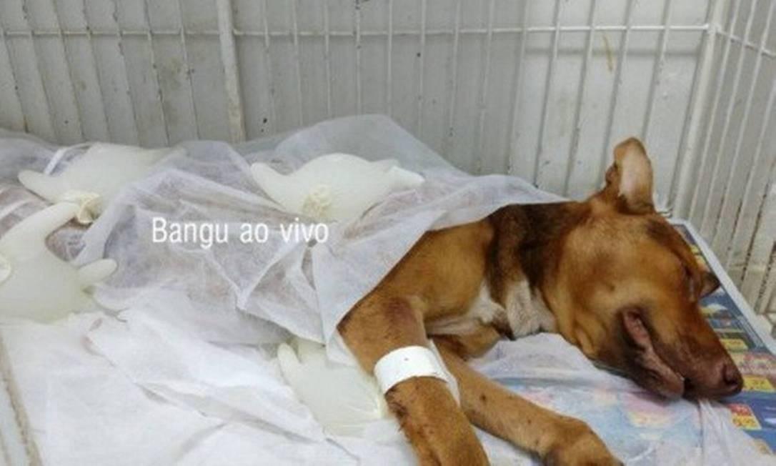 Segundo moradores, PM se irritou porque outro cão latia, disparou em sua direção e acertou Guilherme Foto: Reprodução/Bangu Ao Vivo