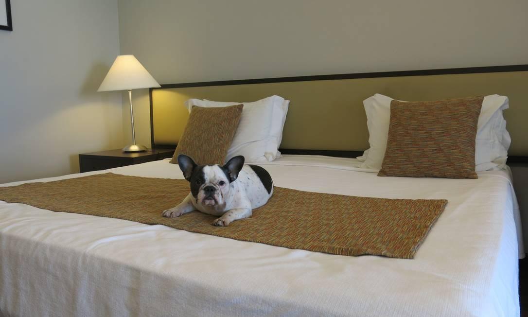 Cachorro em quarto do Savoy Othon, em Copacabana Foto: Adalberto / Agência O Globo