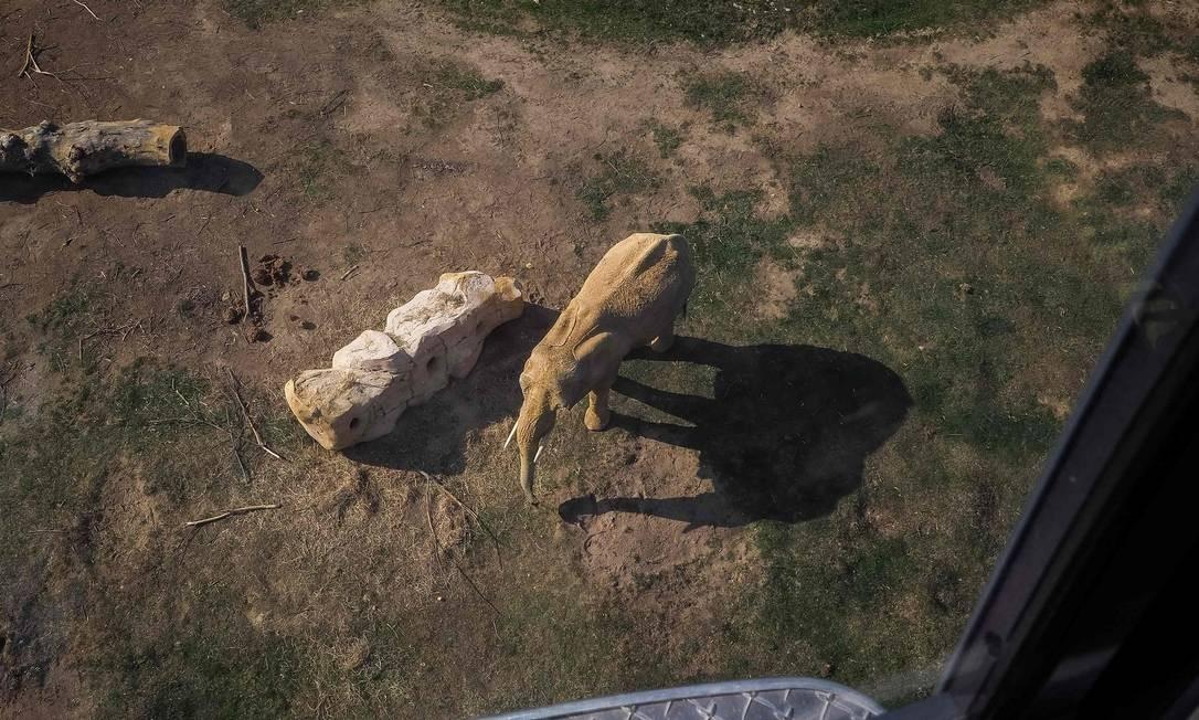 Um elefante, de carne e osso, é visto do alto do teleférico do ZooParc de Beauval, que tem mais de três mil animais Foto: Guillaume Souvant / AFP