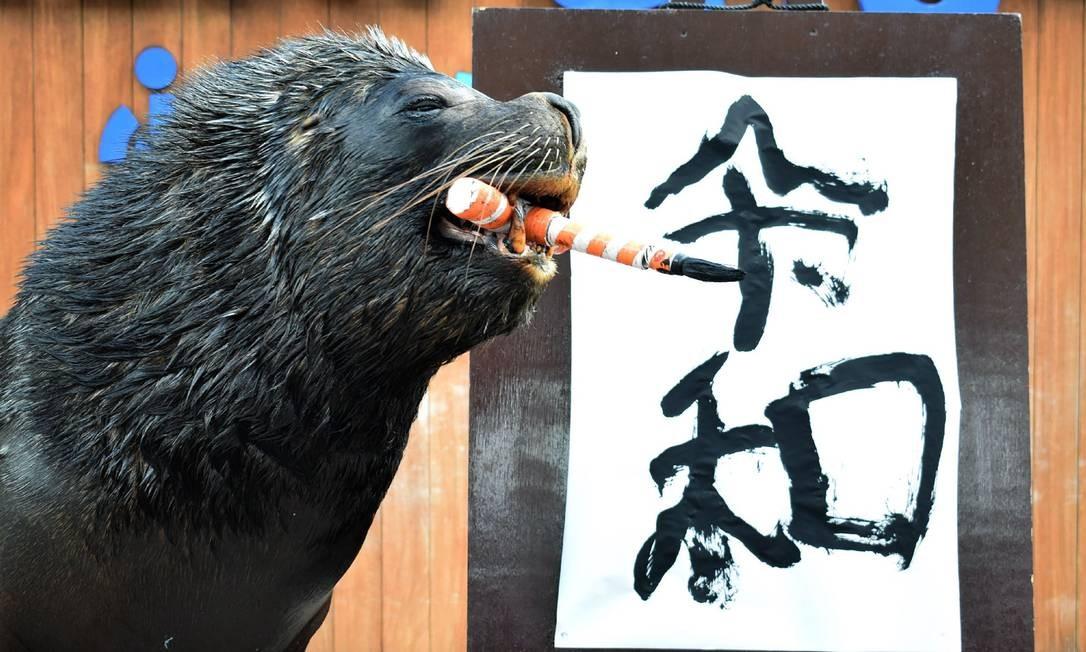 """O leão-marinho Leo posa depois de escrever o nome da era do Japão, """"Reiwa"""", durante uma performance para jornalistas e visitantes do parque Hakkeijima Sea, em Tóquio Foto: JIJI PRESS / AFP"""