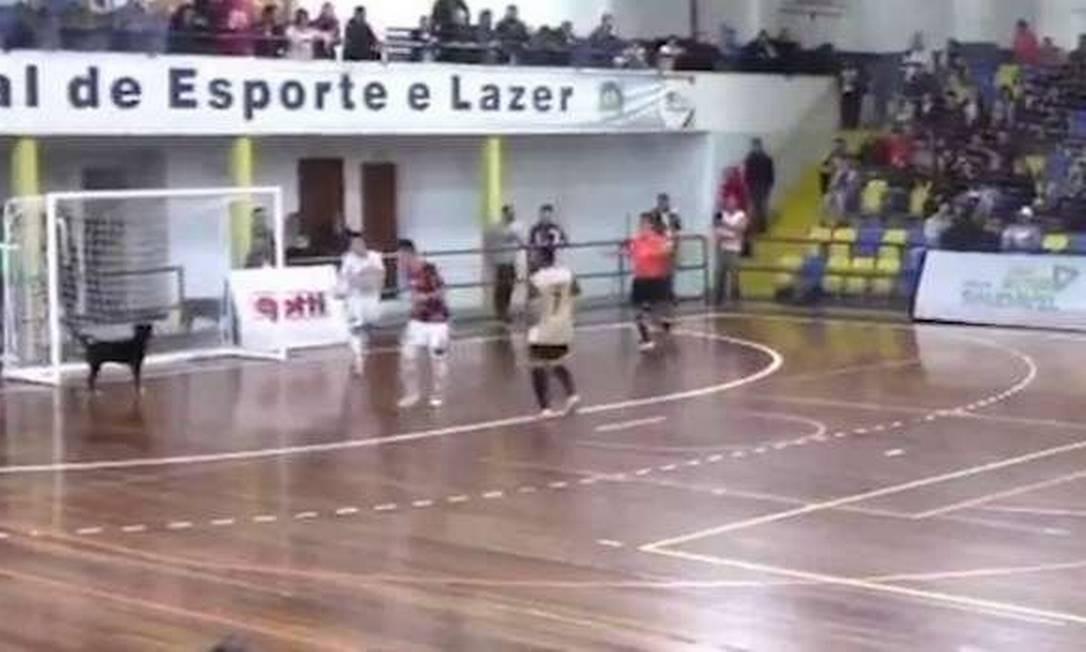 959b832e29c3a Cachorro invade jogo de futsal e evita gol do time da casa no Paraná  veja  vídeo - Jornal O Globo