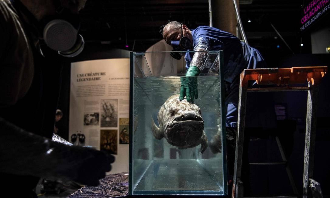 Taxidermistas instalam um celacanto em um tanque cheio de formol para a exposição Oceano antes de sua inauguração no Museu Nacional de História Natural, em Paris Foto: CHRISTOPHE ARCHAMBAULT / AFP