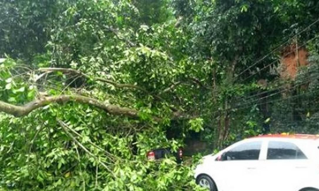 Com os fortes ventos e chuva, árvores caíram sobre a rede elétrica na Autoestrada Grajaú-Jacarepaguá e, por pouco, não atingem um veículos Foto: Divulgação/Light