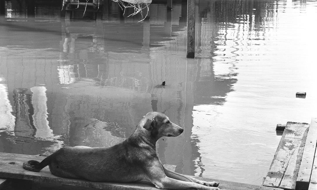 Cachorro parado durante enchente em Vigário Geral, Rio de Janeiro, em 1961 Foto: Agência O Globo
