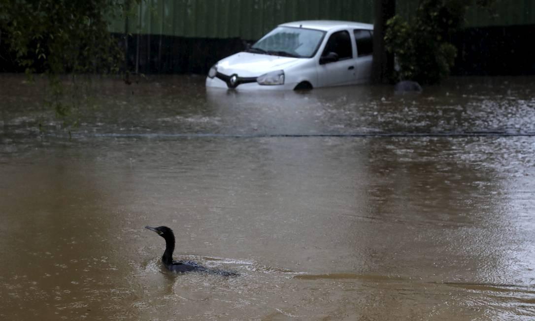 Um pato nada pela Rua General Garzon, na Lagoa, durante o temporal do dia 9 Foto: Custódio Coimbra / Agência O Globo