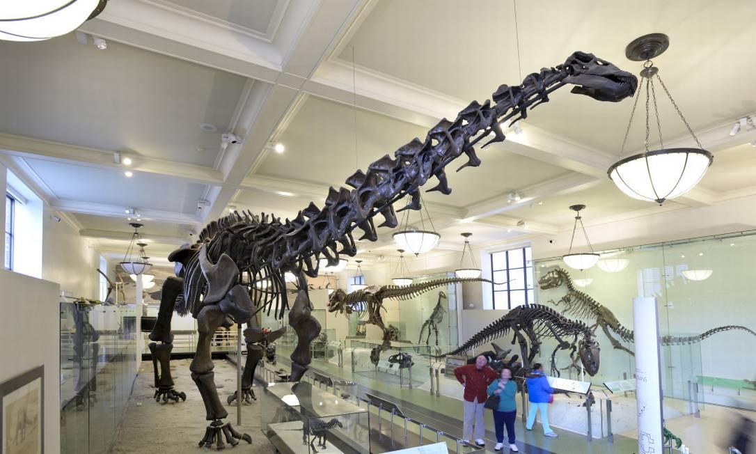 Dinossauro do Museu de História Natural de Nova York Foto: Denis Finnin / Divulgação
