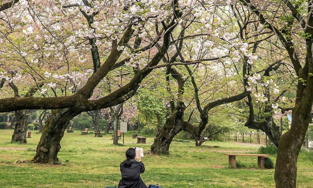 Durante o Dia do Verde, um dos feriados da chamada Semana de Ouro no Japão, os parques de Tóquio, como o Jardim Botânico de Koishikawa, têm entrada gratuita Foto: NOAH FECKS / The New York Times