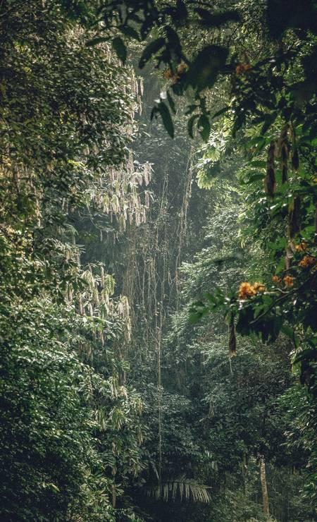 A floresta exuberante do Parque Nacional Cuc Phuong. O Vietnã é o lar de 30 parques nacionais, e a floresta contém cerca de 2 mil espécies de árvores. Grande parte da vida selvagem no parque já desapareceu Foto: DAVID RAMA TERRAZAS MORALES / NYT