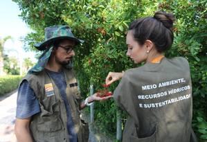 Funcionários da prefeitura colhem sementes em Camboinhas: mudas serão plantadas por mutirões Foto: Luciana Carneiro / Prefeitura de Niterói