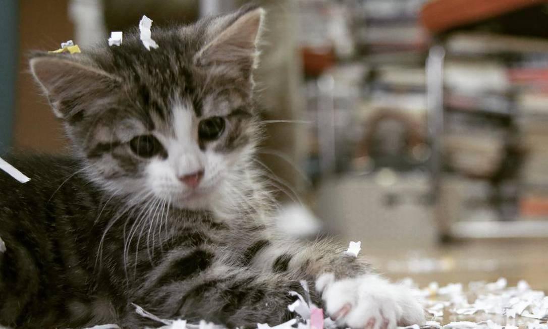 Imagem do gato de Assange ainda filhote dentro da embaixada, da conta dele na rede social Twitter: seguidores estavam preocupados com seu destino após prisão do dono na semana passada Foto: Reprodução/Twitter