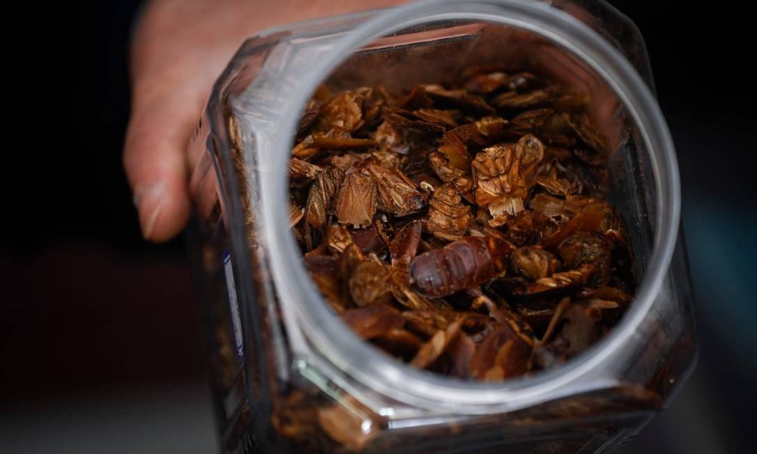 Baratas desidratadas também são usadas como medicação Foto: WANG ZHAO / AFP