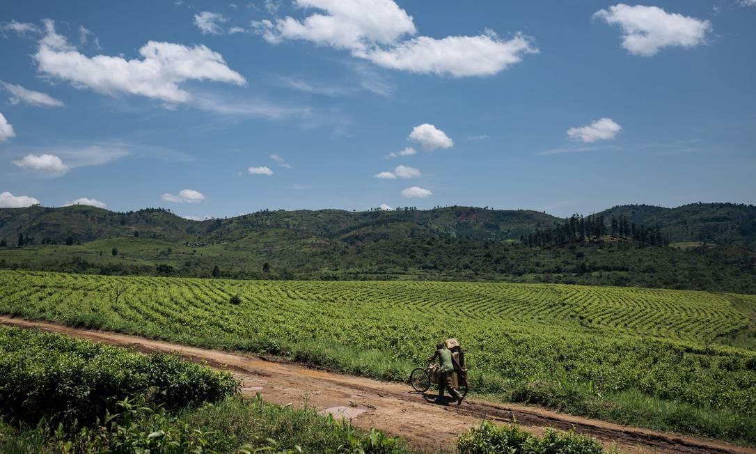 Um homem atravessa uma plantação de chá perto de Mweso, no leste da República Democrática do Congo, uma área dominada por milícias Foto: ALEXIS HUGUET / AFP