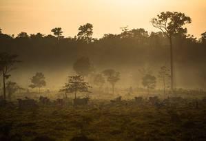 Cientistas ressaltam que melhor aproveitamento e restauração de terras degradadas evitarão desmatamento de novas áreas Foto: Divulgação/Thiago Foresti
