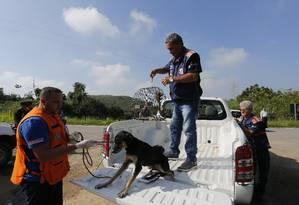 Animais são resgatados em área isolada após vazamento de gasolina de um oleoduto no bairro Parque Capivari, em Duque de Caxias Foto: Pablo Jacob / Agência O Globo