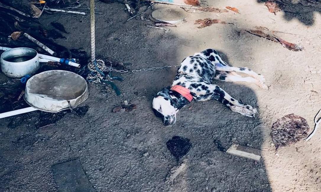 Família perdeu quatro cachorros de estimação Foto: Divulgação