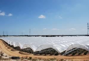 Estufas de plantio de morango na região de Huelva, Espanha: imigrantes chegam a trabalhar 12 horas por dias nos cultivos, pulando de colheita em colheita e morando em minifavelas Foto: Alessandro Soler