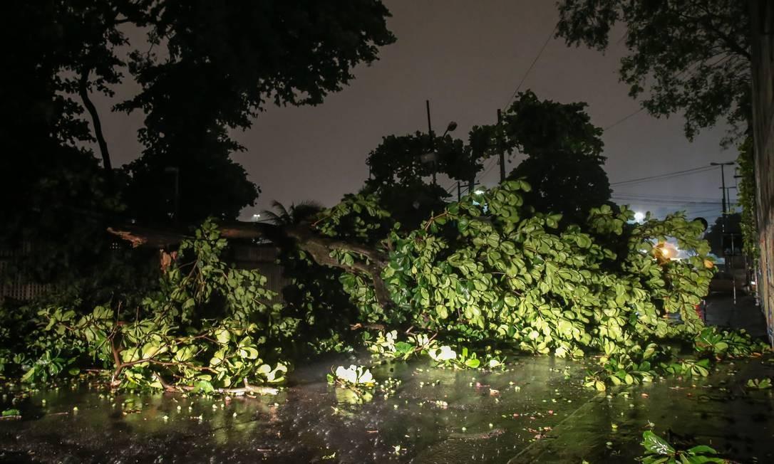 Árvore caída na Rua Marquês de Pombal, no Centro do Rio Foto: Marcelo Regua / Agência O Globo