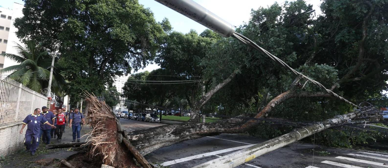 Árvore cai sobre fiação e derruba poste na Rua Joaquim Palhares, no Estácio, na área central do Rio. A via está bloqueda Foto: Pedro Teixeira / Agência O Globo