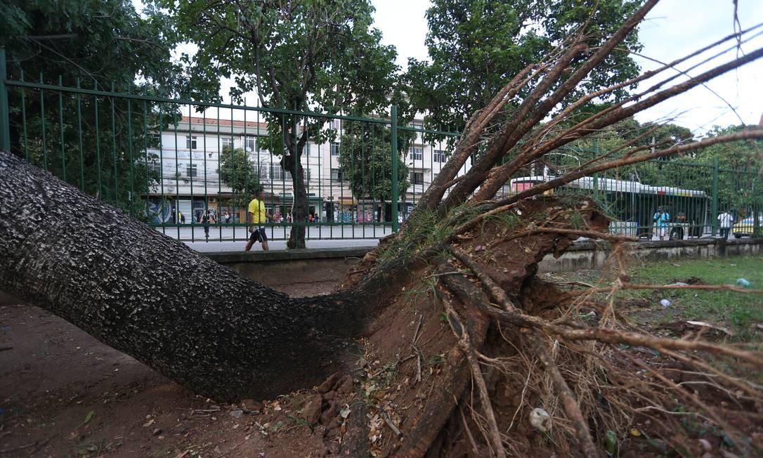 Perto do metrô, outra árvore caiu no Estácio Foto: Pedro Teixeira / Agência O Globo