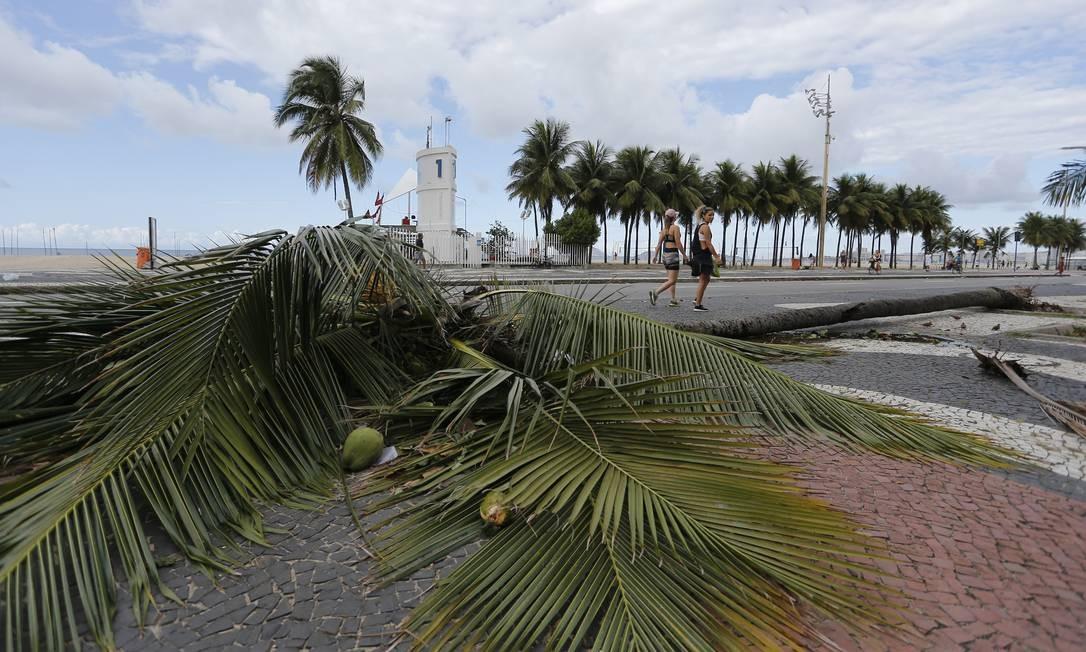 Coqueiro é arrancado pelo vento no Leme, na Zona Sul do Rio Foto: Pablo Jacob / Agência O Globo