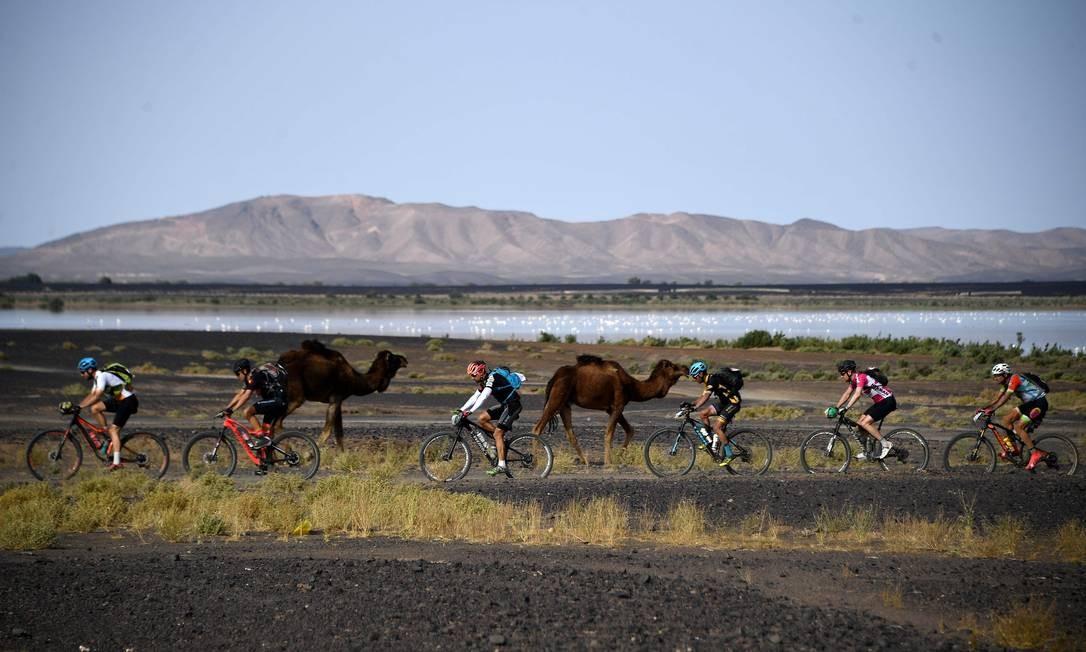 Ciclistas passam por camelos durante a segunda etapa da 14ª edição do Titan Desert 2019, entre as cidades de Merzouga e Ouzina, no Marrocos Foto: FRANCK FIFE / AFP