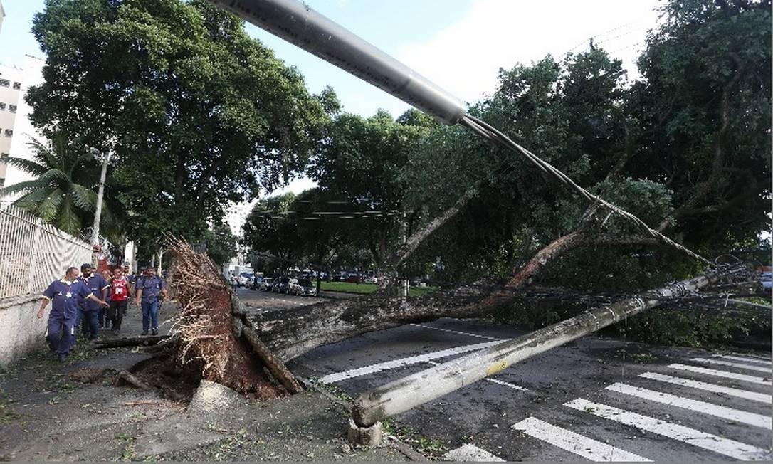 Árvore cai sobre fiação e derruba poste de energia elétrica na Rua Joaquim Palhares, no Estácio, na área central do Rio Foto: / Pedro Teixeira - Agência O Globo
