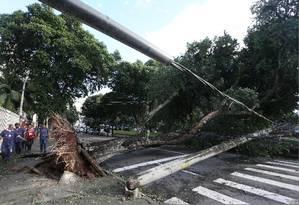 Árvore cai sobre fiação e derruba poste de energia elétrica na Rua Joaquim Palhares, no Estácio, na área central do Rio Foto: Pedro Teixeira - Agência O Globo