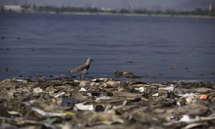 Aveia passeia sobre o lixo no Fundão, às margens da Baía de Guanabara Foto: Márcia Foletto / Agência O Globo