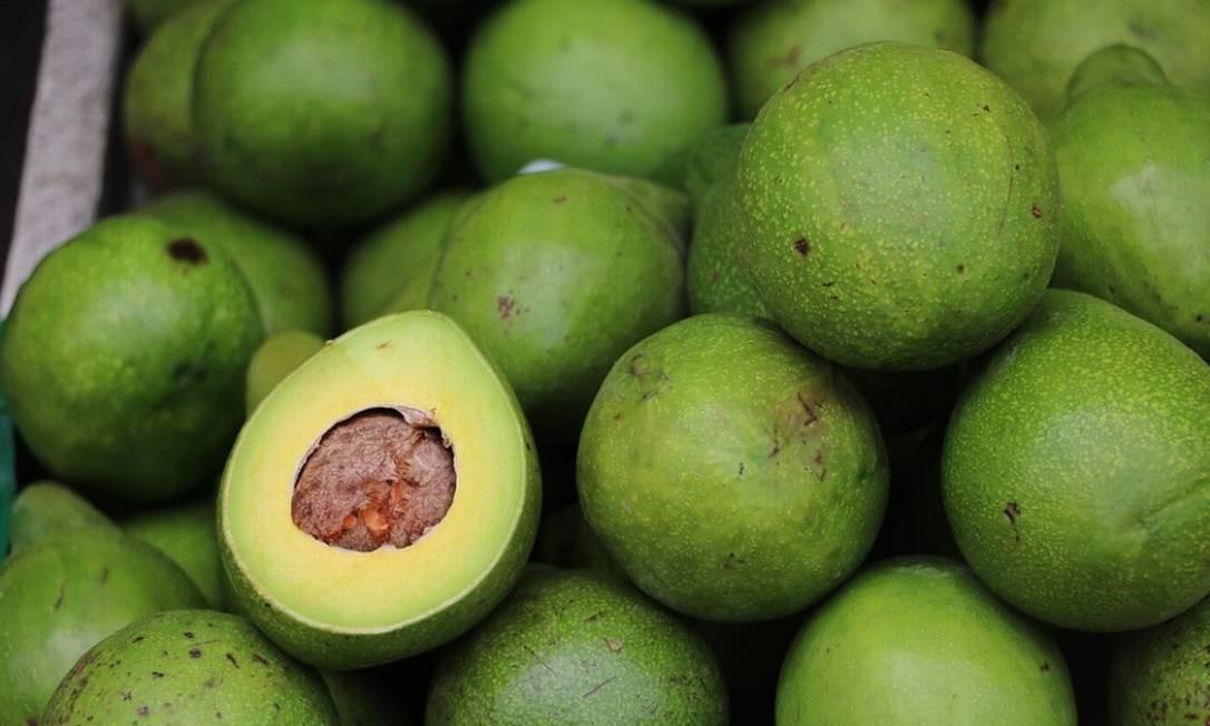 Abacate do Brasil está sendo exportado para Argentina Foto: Pixabay