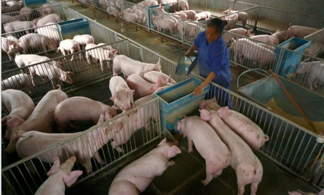 Criação de porcos na China Foto: Reuters