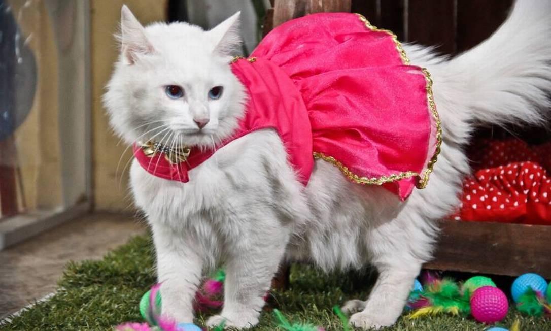 Enfermeira do Distrito Federal que cria gata em apartamento perdeu em duas instâncias, mas venceu no Superior Tribunal de Justiça Foto: Reprodução