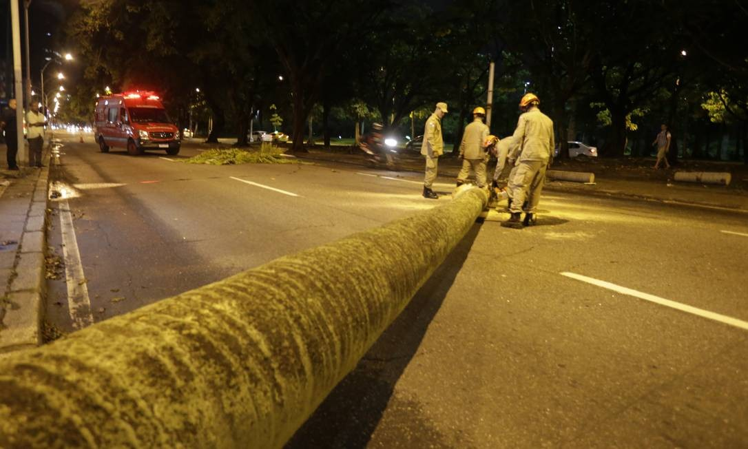 Queda de palmeira interdita pista no Flamengo Foto: Marcelo Theobald / Agência O Globo