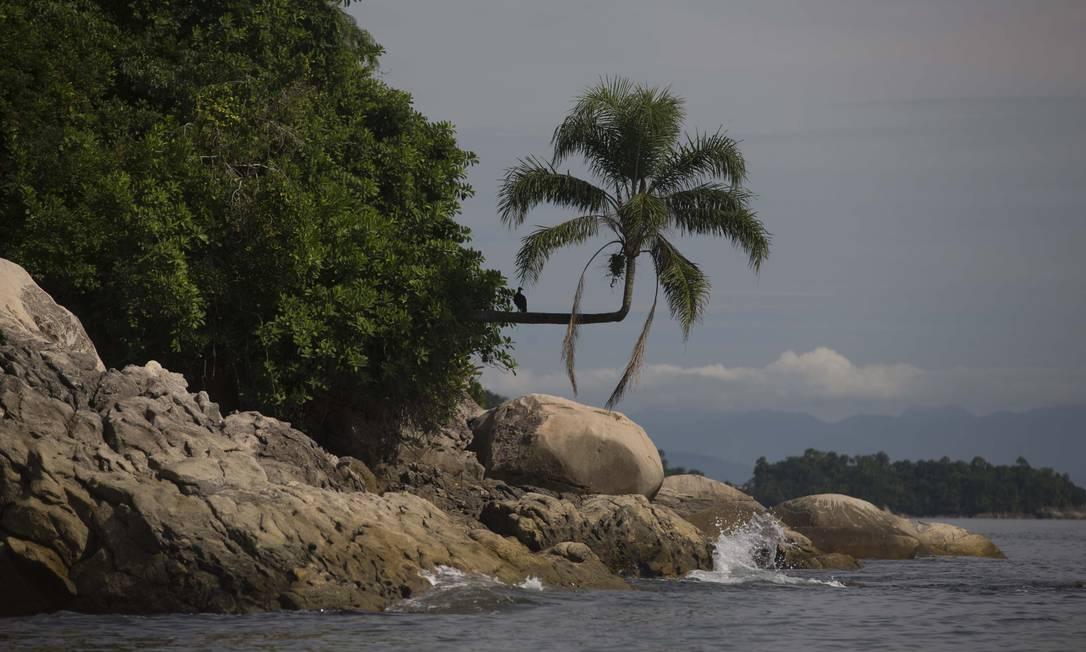A Ilha da Samambaia, local onde o presidente Jair Bolsonaro foi multado por pesca ilegal Foto: Márcia Foletto / Agência O Globo