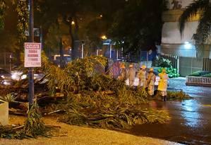 Árvore caiu no Corte do Cantagalo e paralisou o tráfego no sentido Copacabana Foto: Centro de Operações Rio (COR)