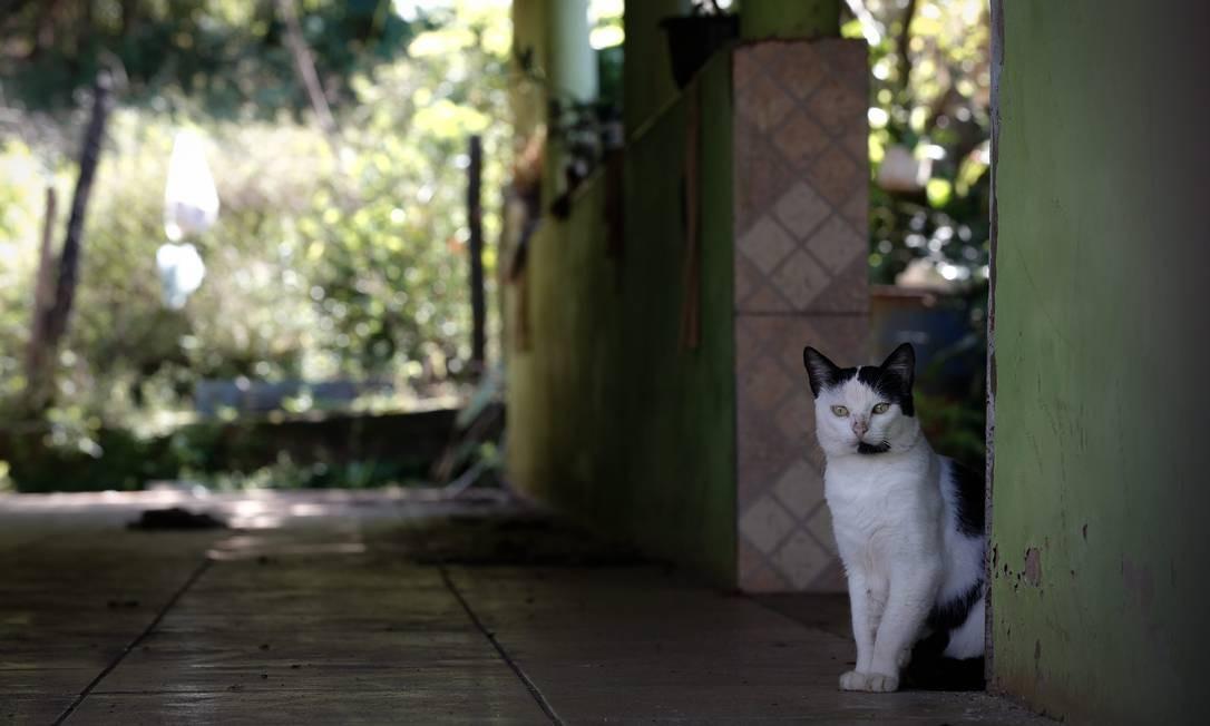 Gato esquecido no imóvel de número 550, um cavalo e uma seriema no distrito de Socorro, em Minas Gerais Foto: Pablo Jacob / Agência O Globo
