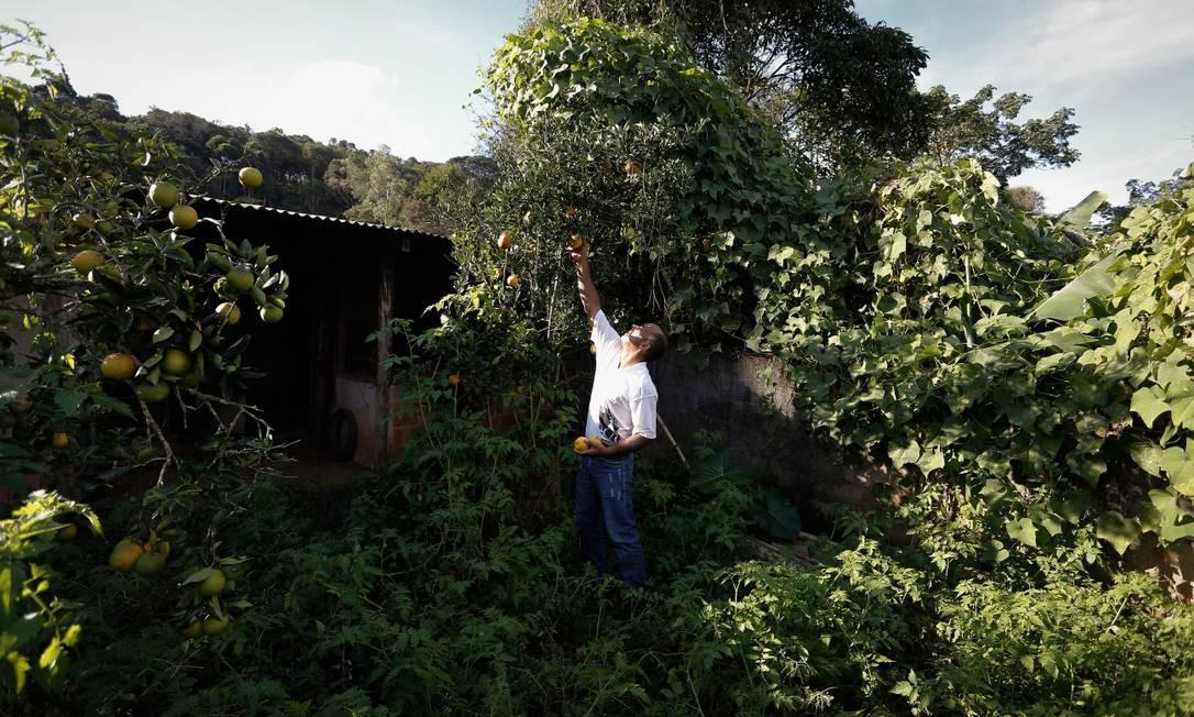 No quintal da casa abandonada há dois meses, Amarante colheu tangerina antes de deixar o local Foto: Pablo Jacob / Agência O Globo
