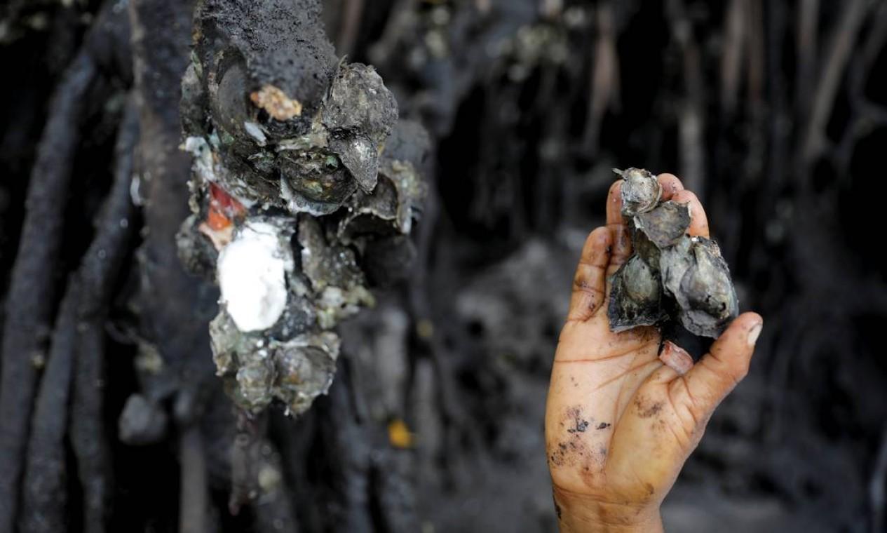 Vandeka, esposa do pescador José da Cruz, colhe ostras de mangue no rio Caratingui, em Cairu Foto: NACHO DOCE / REUTERS