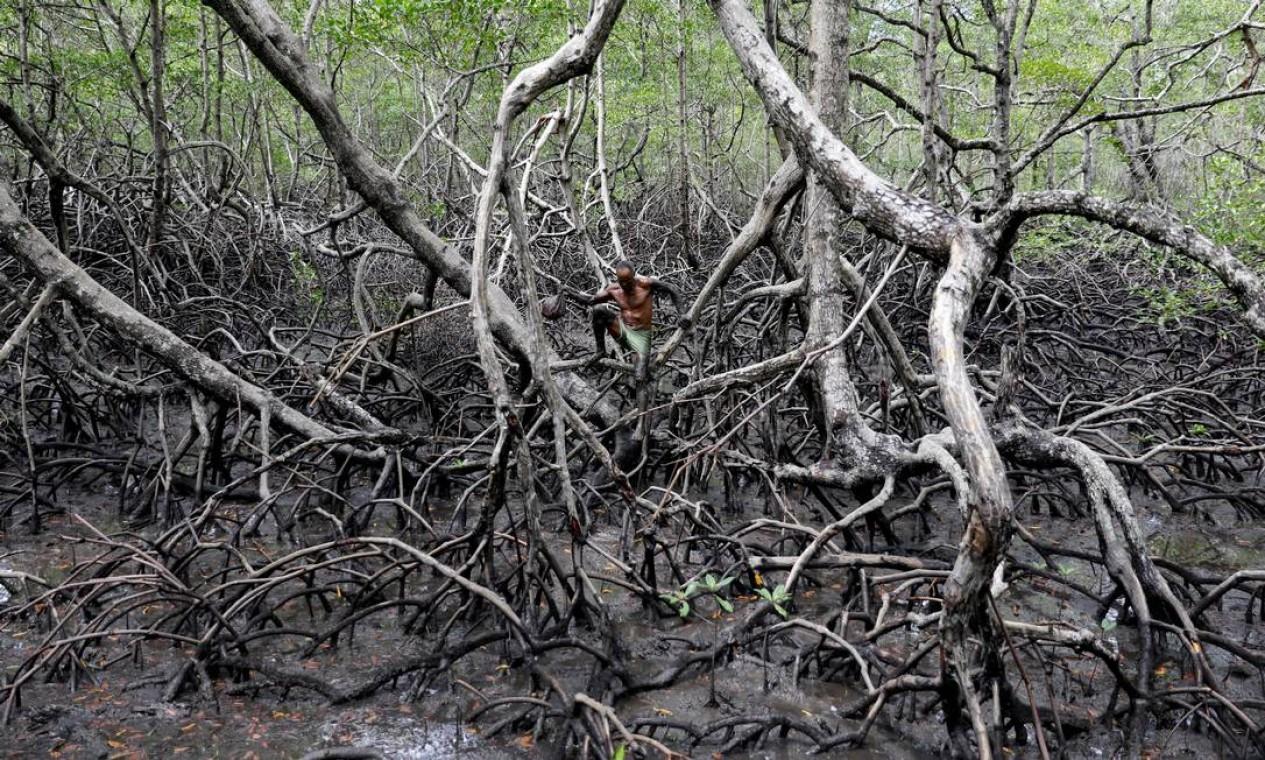 Pescadores como José da Cruz sobreviveram por décadas caçando caranguejos entre as vastas florestas costeiras de manguezais do Brasil. O aquecimento global, no entanto, vem causando o aumento da temperatura da água e, consequentemente, a morte de caranguejos e outros animais em sua cadeia alimentar Foto: NACHO DOCE / REUTERS
