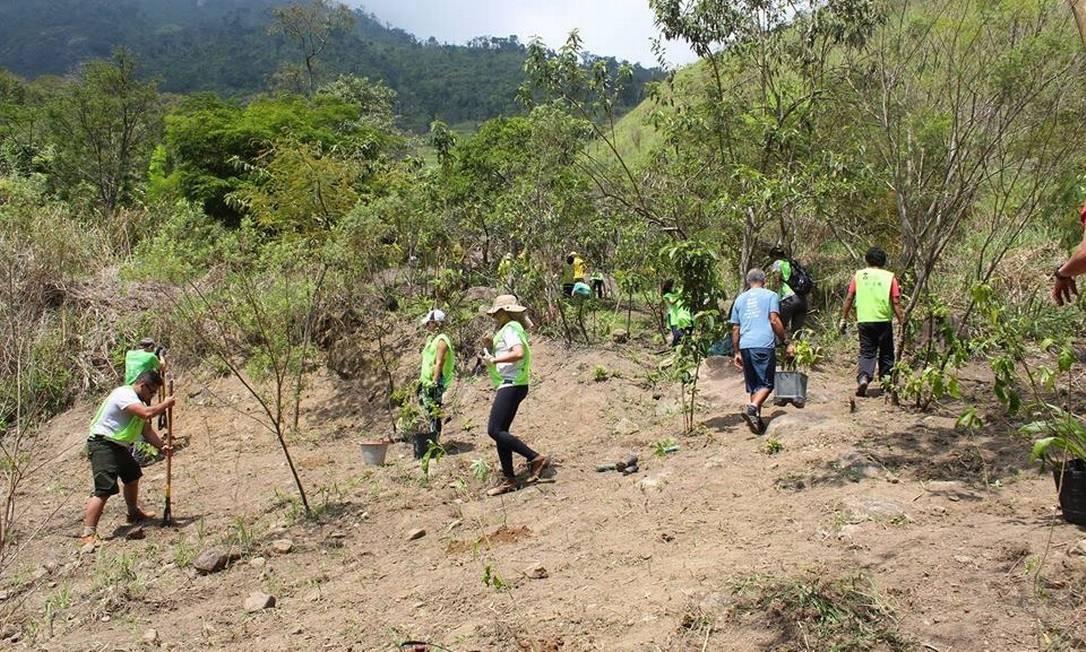 Voluntários vão plantar mil mudas durante mutirão Foto: Alane Oliveira / Divulgação