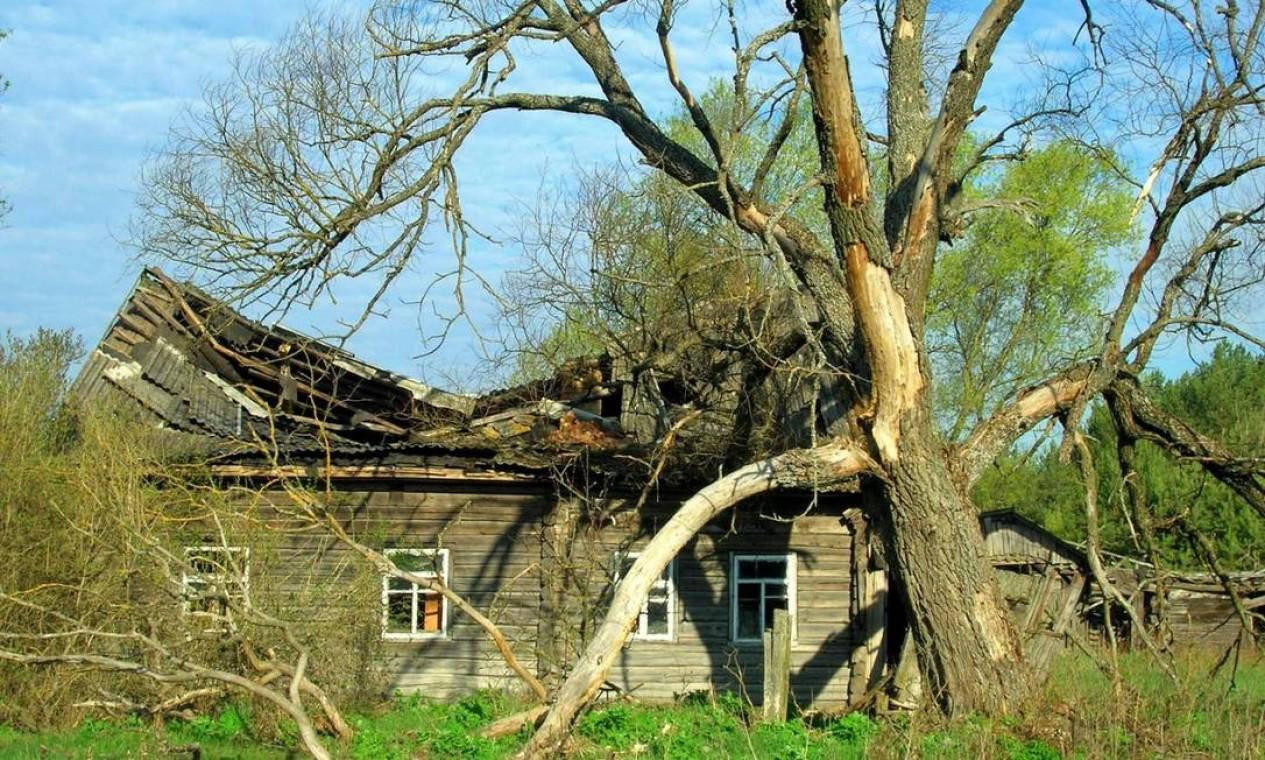 Vida selvagem prospera nos arredores de Chernobyl, em registro de 2015 Foto: Valeriy Yurko / Valeriy Yurko