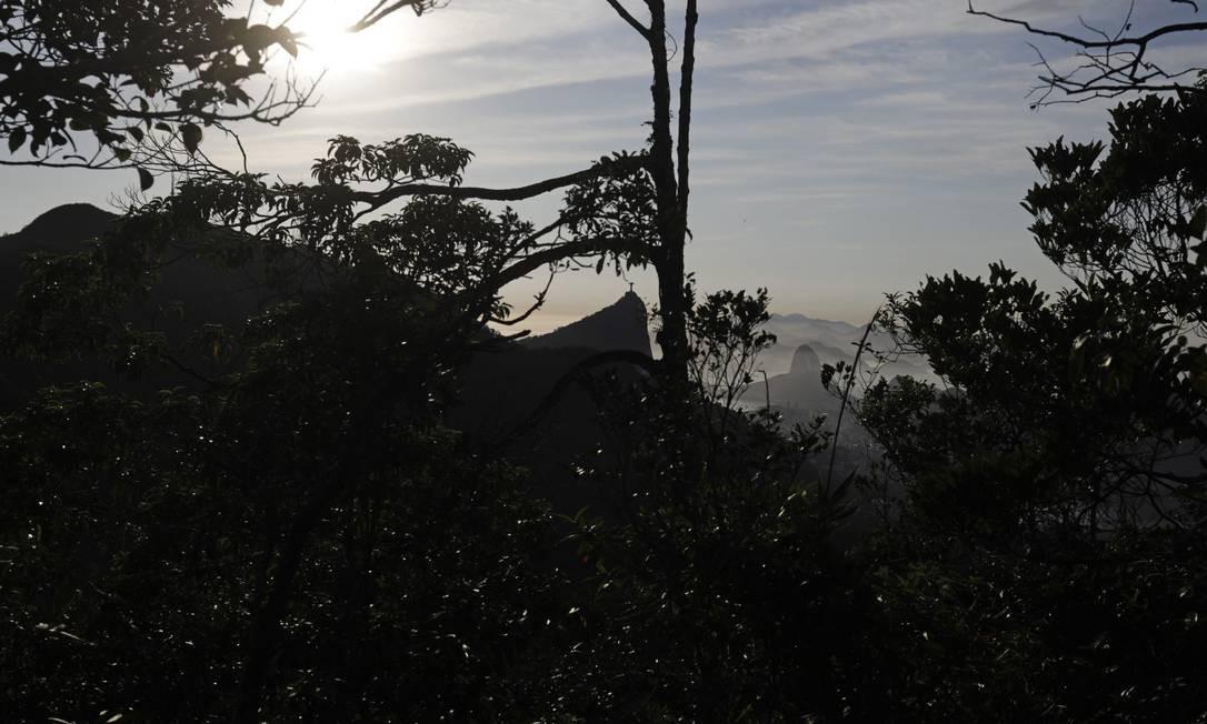 Morro do Pai Ricardo na Floresta da Tijuca Foto: Custodio Coimbra / Agência O Globo