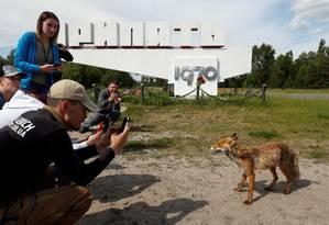 Turista tira foto de uma raposa na cidade abandonada em Pripyat, perto de Chernobyl, em 2 de junho de 2019 Foto: VALENTYN OGIRENKO / REUTERS