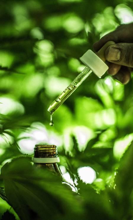Pesquisas internacionais indicam a eficácia de alguns componentes contra dores crônicas. Foto: Fábio Seixo / Agência O Globo