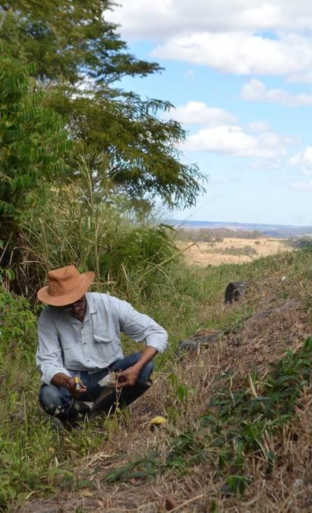 Roberto Candero procurando fósseis em Goiás: região era, por volta de 86 milhões de anos atrás, uma bacia com dunas e lagos Foto: Reprodução