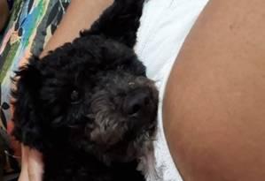 O cachorro Bolt, de um ano, foi morto por um tiro durante operação no Complexo da Penha Foto: Arquivo pessoal