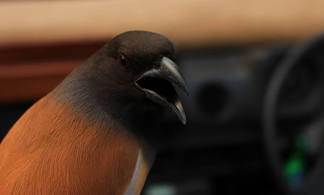 Espécie de ave no Parque Nacional Ranthambore Foto: Felipe Mortara