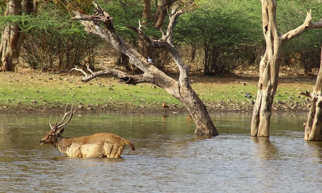 Açude é parada certa no Parque Nacional Ranthambore Foto: Felipe Mortara